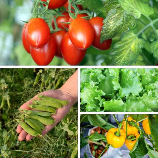 Best vegetables to grow in a small garden