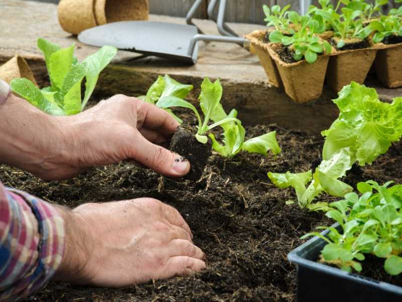 Tips on how to start a vegetable garden from scratch
