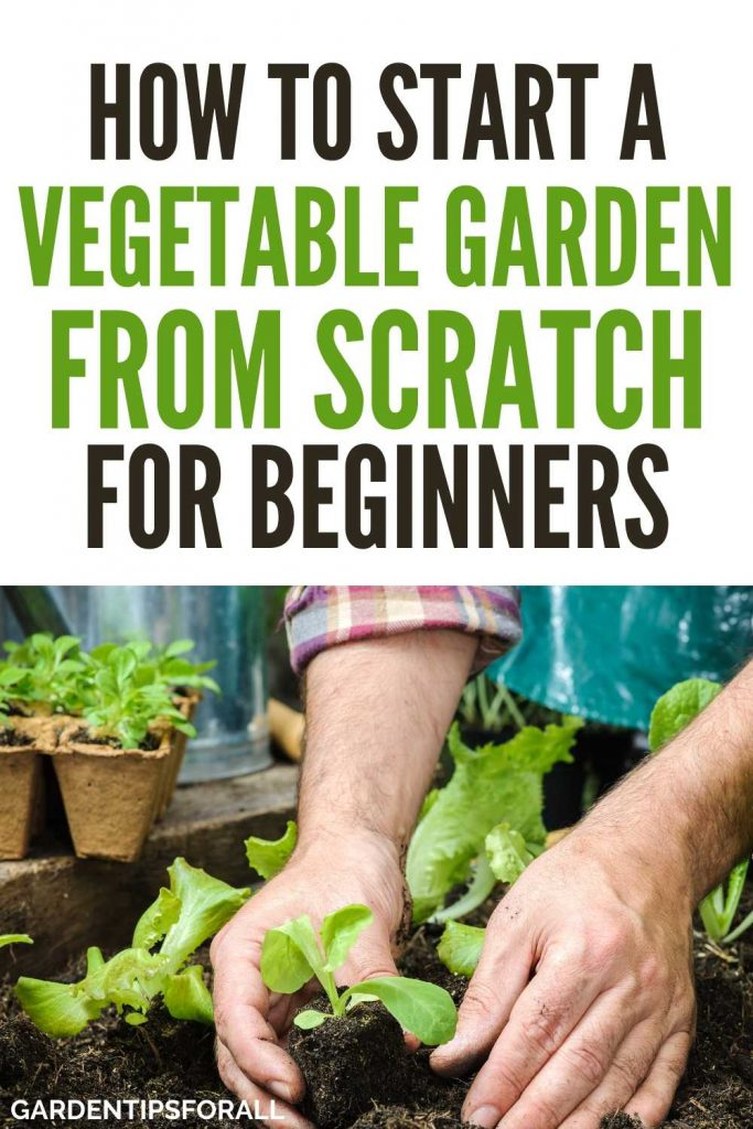 Tips to Starting a Vegetable Garden from Scratch for Beginners