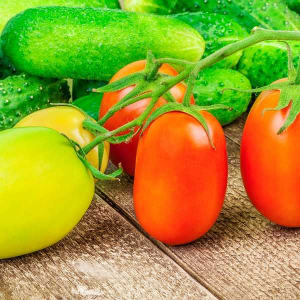 Vegetables that keep producing