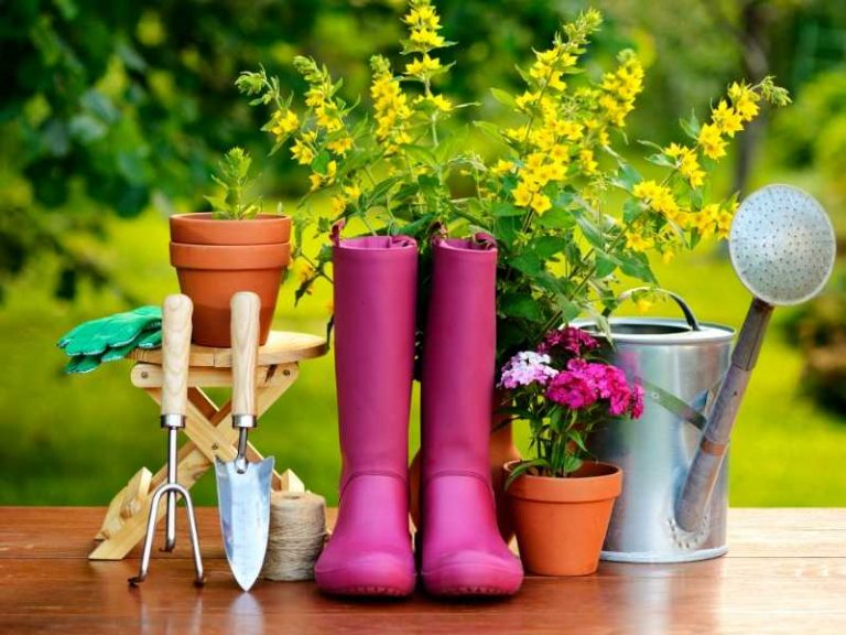 Basic Gardening Tools for Beginners