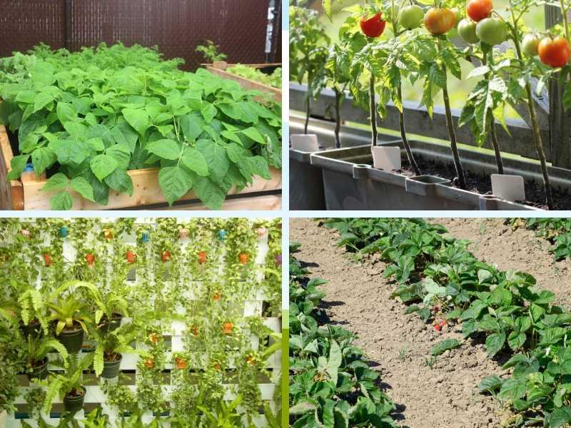 Basic vegetable garden layout ideas