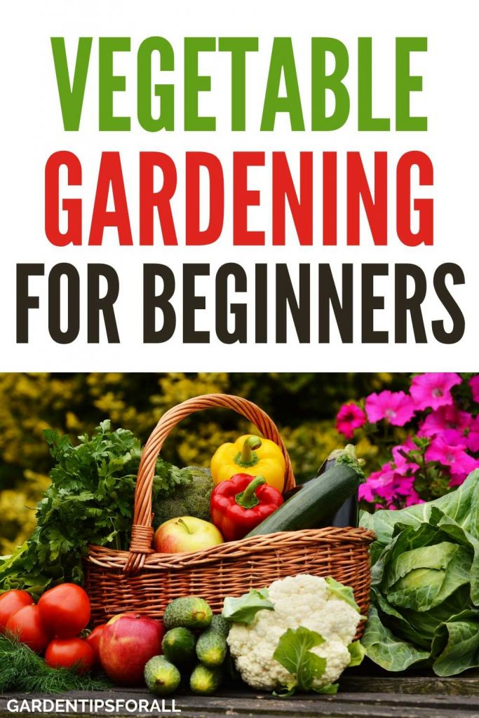A simple beginners guide to vegetable gardening