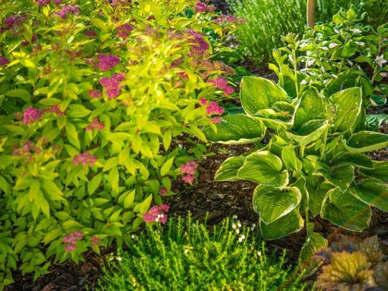 Types of Garden Plants