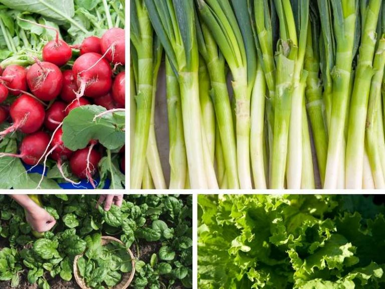 Easy and Fast Growing Vegetables