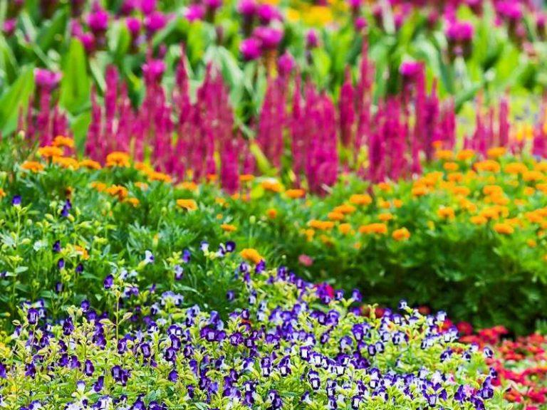 Flowering Perennials that Bloom all Summer