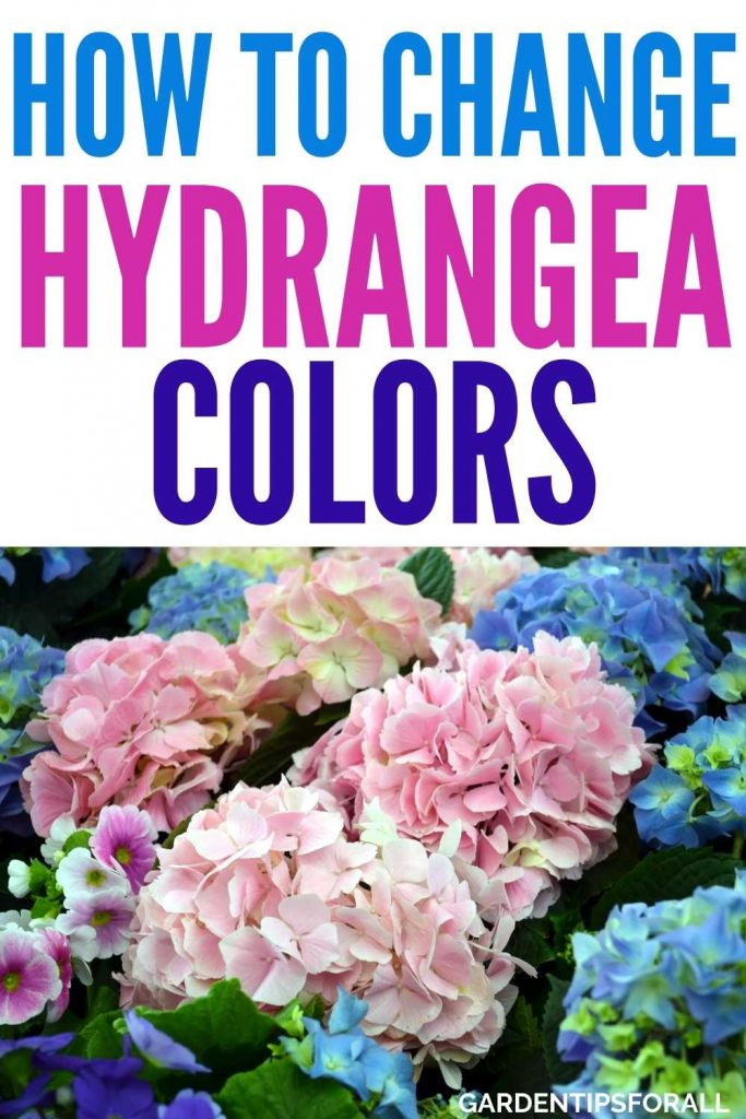How to change hydrangea flower color