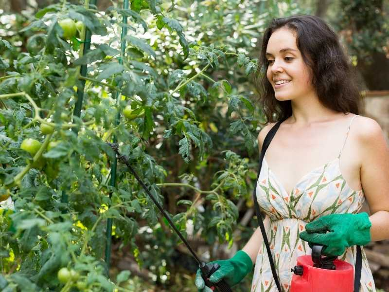 Can you eat vegetables sprayed with Neem oil