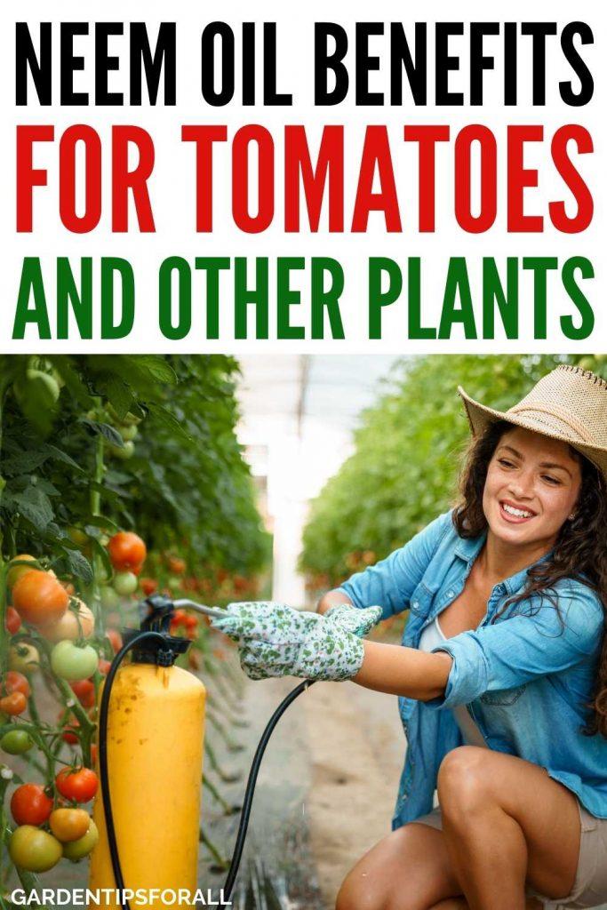 Neem oil benefits for tomato plants