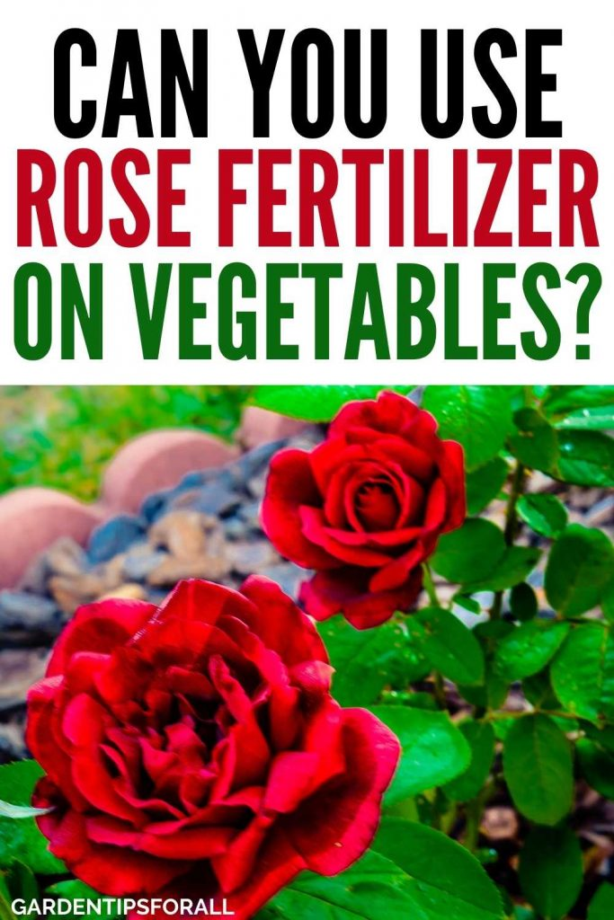 Can you use rose fertilizer on vegetables