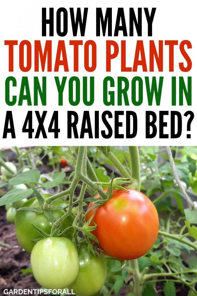How many tomato plants can you grow in a 4x4 raised bed