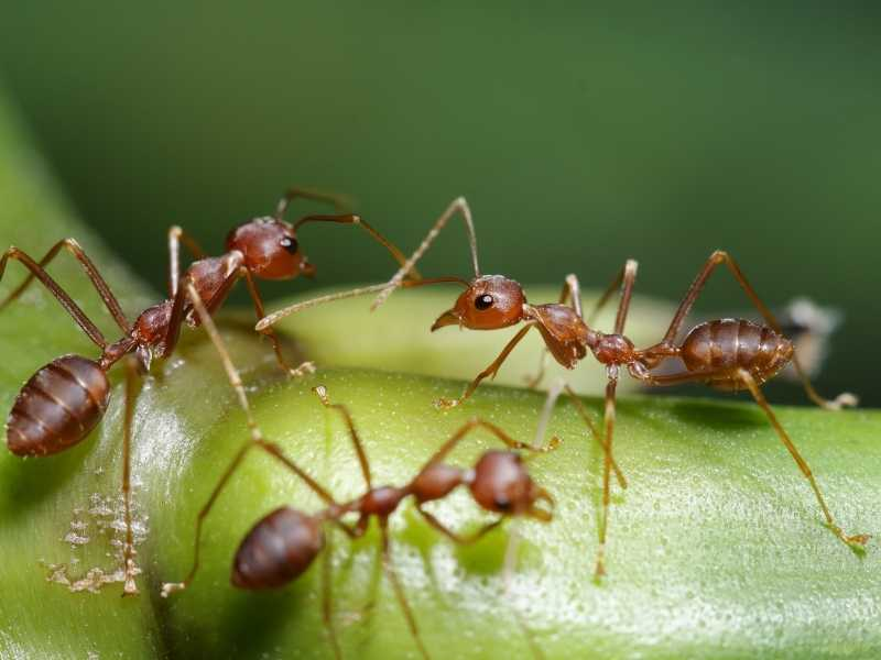 Natural ways to get rid of ants in the garden