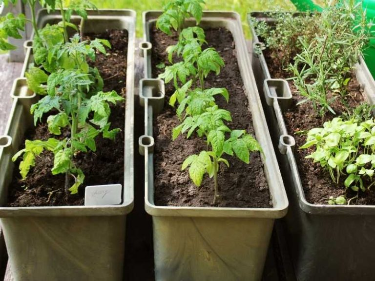 What Vegetables Grow Well Together in Containers?