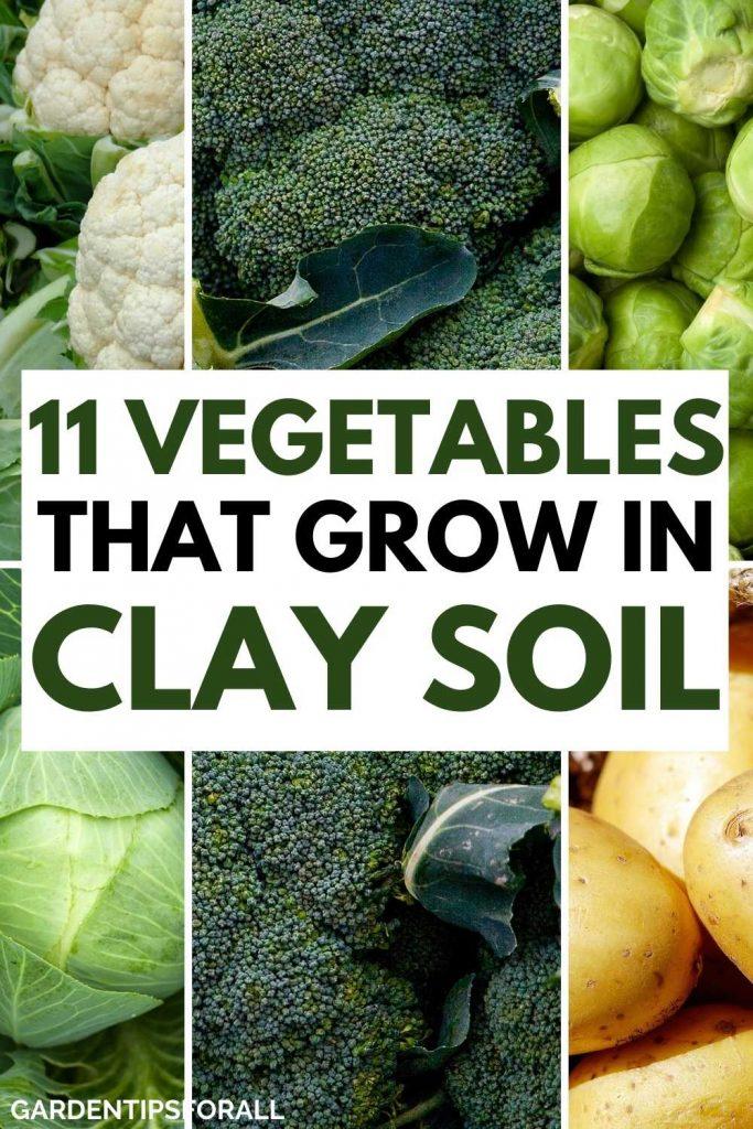 Best vegetables that grow in clay soil
