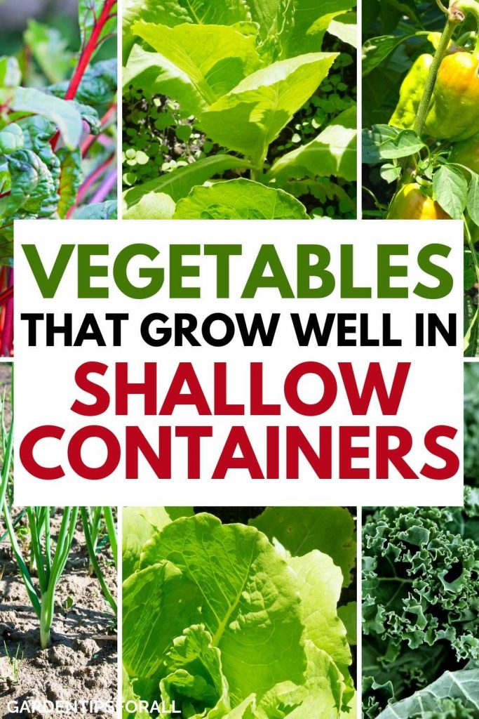 Vegetable plants that grow in shallow containers