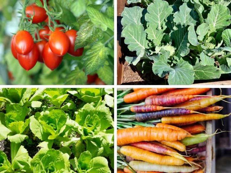10 Vegetables that Grow in Sandy Soil