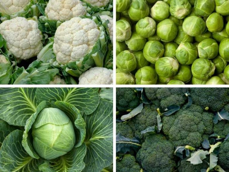 11 Vegetables that Grow Well in Clay Soil