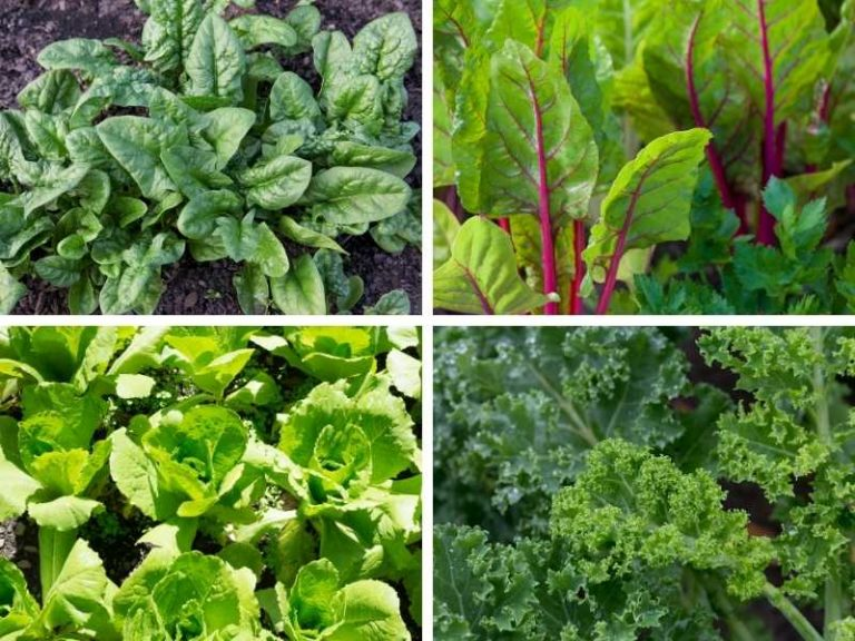Vegetables that Grow Well in Shallow Containers