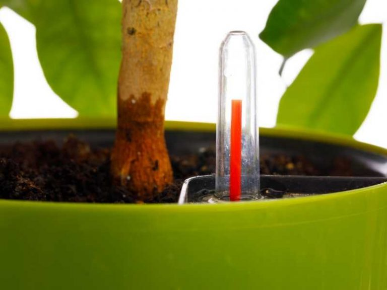 How Do Self Watering Planters Work?