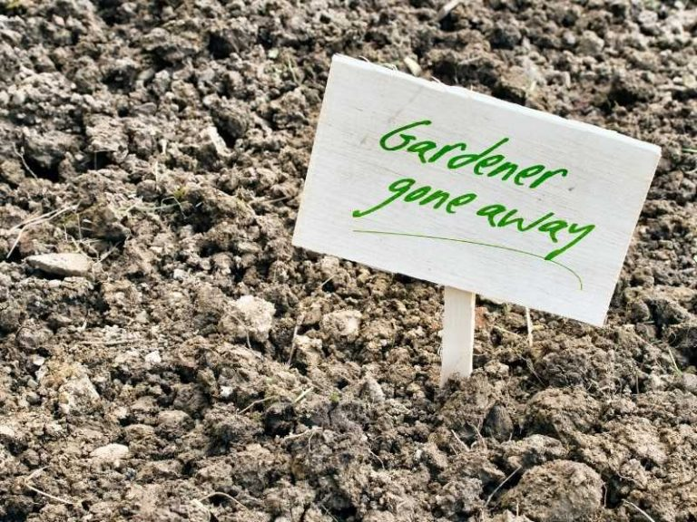 How to Amend Clay Soil for Vegetable Gardening