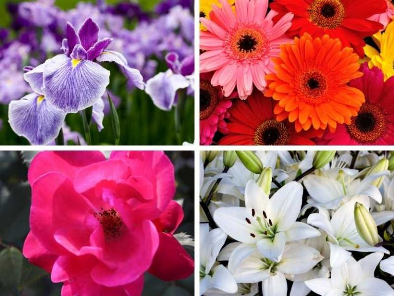 11 Native French Flowers You Can Grow in Your Garden