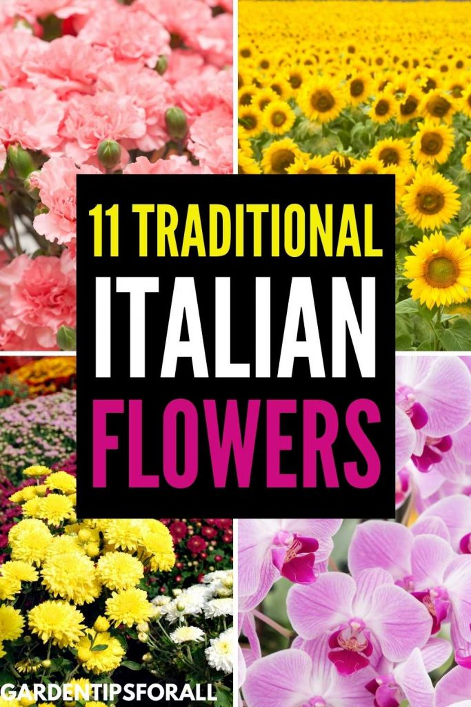 Popular flowers in Italy