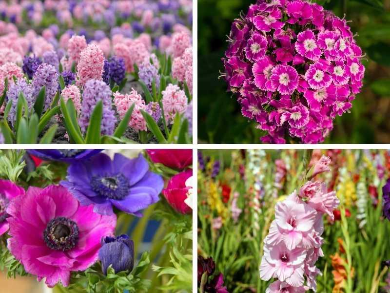 Native Greek flowers