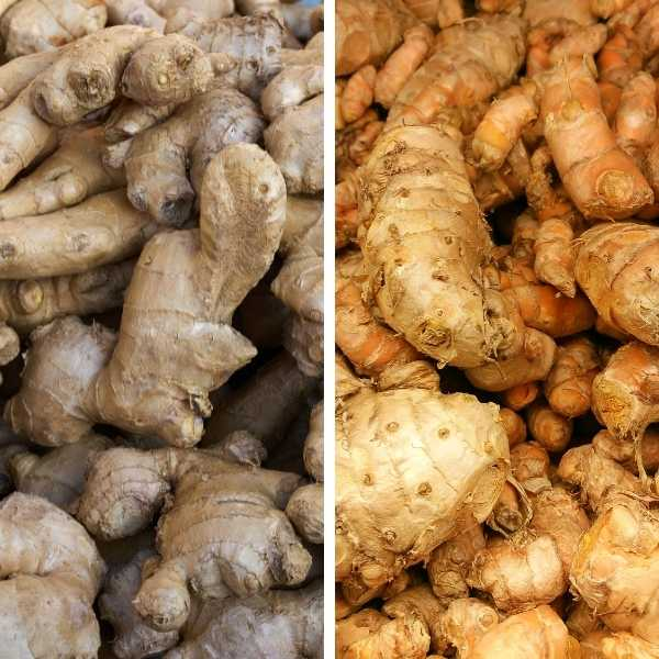 Ginger and turmeric are rhizomes
