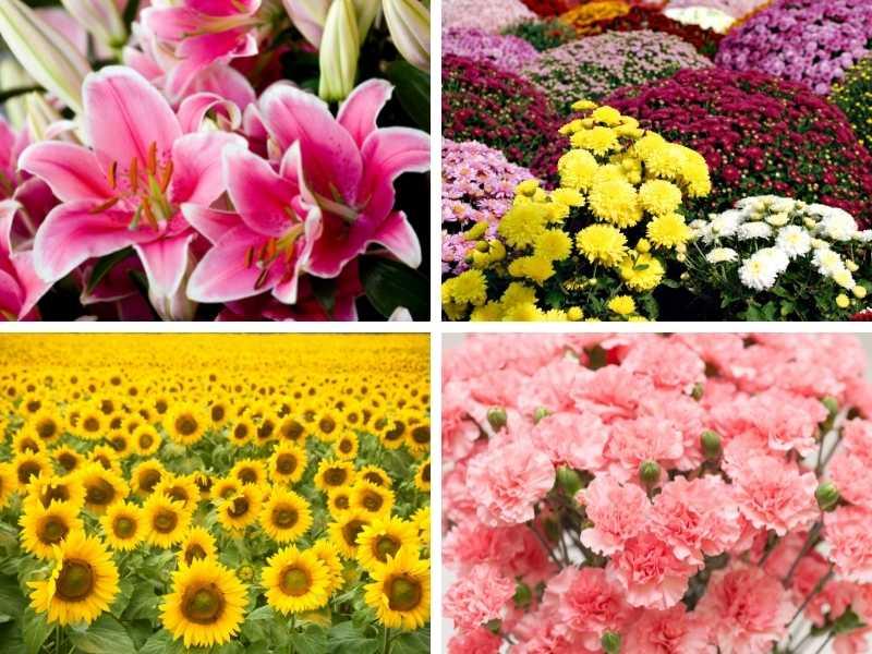 Traditional Italian flowers