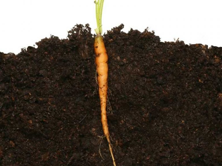 25 Plants with Taproots