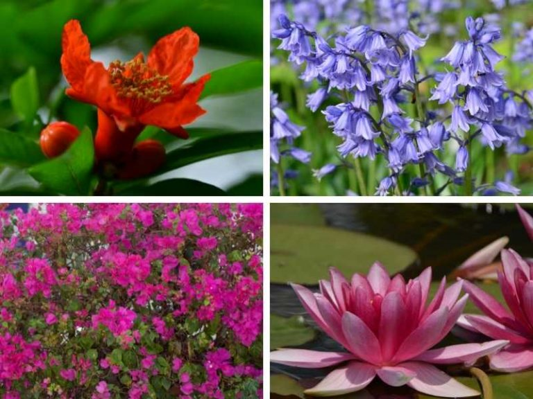 10 Native Flowers of Spain