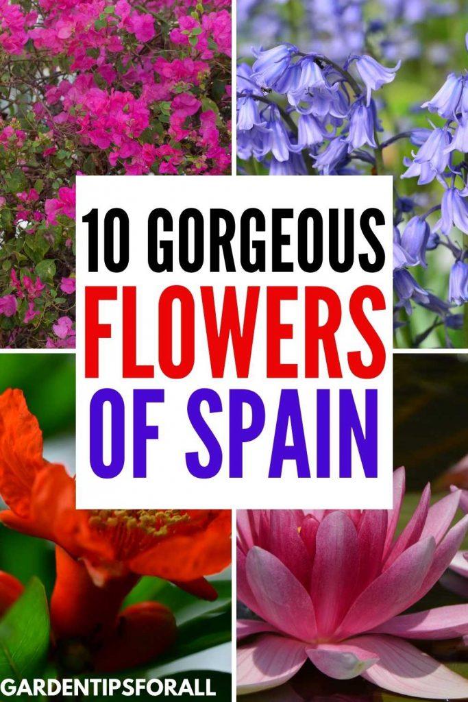 Native Spanish flowers