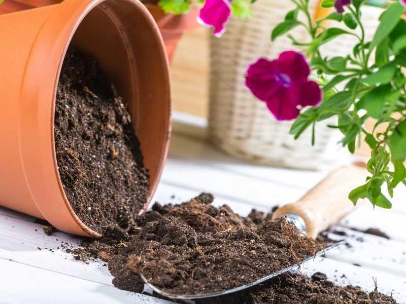 Does potting soil go bad