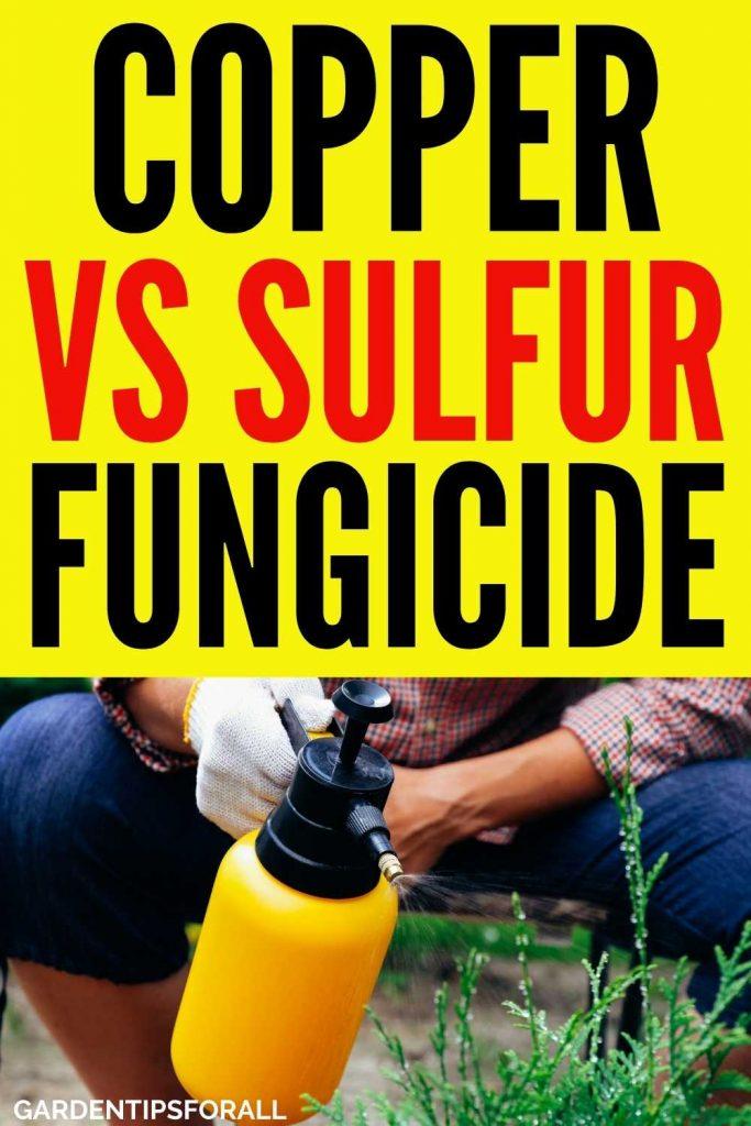 Sulfur vs copper fungicide