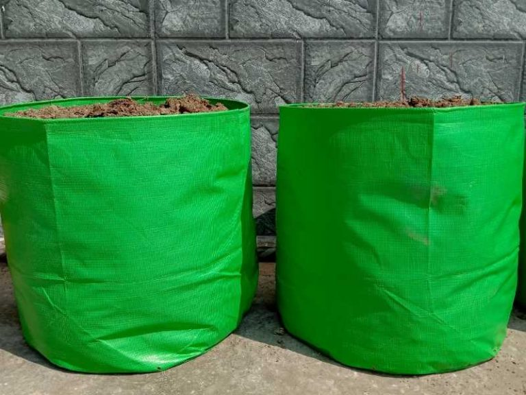 What Size Grow Bag for Tomatoes is the Best?