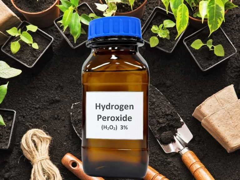 How Much Hydrogen Peroxide for Plants to Use?