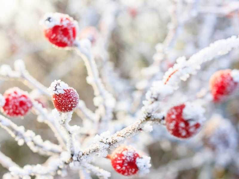 What is the frost temperature for plants